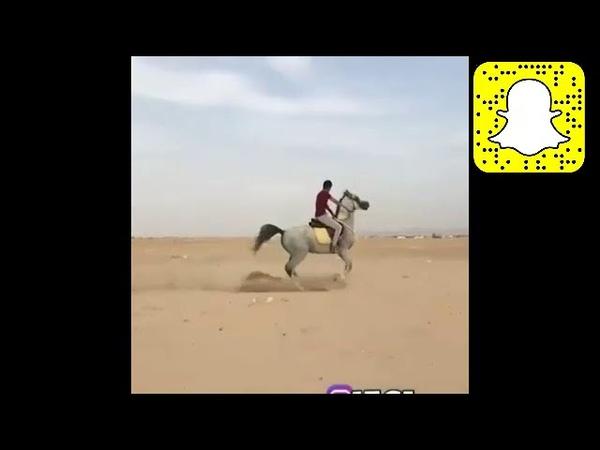 تجميع بعض مقاطع الفرسان والخيول العربيه 2 ص