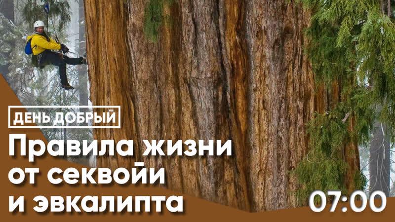 Правила успеха от эвкалипта, секвойи и тропического леса