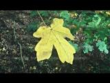 Autumn Leaf - Original Poetry (HD)