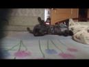 Мой хозяин идиот 20 серия Масяня зовёт кота
