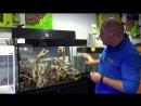 Aquael GLOSSY 100 в продаже в супермаркете аквалогонавднх