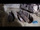 Archäologen entdecken eine vergoldete Mumienmaske