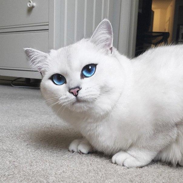 Встречайте кота с самыми красивыми в мире глазами.