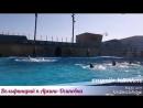 Дельфинарий п.Архипо-Осиповка