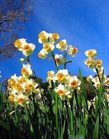 Spring time ... N-qLDrRbcMc