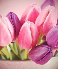 """Всегда свежие розы, хризантемы, тюльпаны и небесные фонарики со скидкой до 50% от салона цветов и сувениров  """"Элегия """"..."""