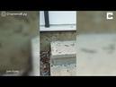 Реакция гусениц на крик