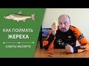 Видео Как поймать жереха Советы эксперта