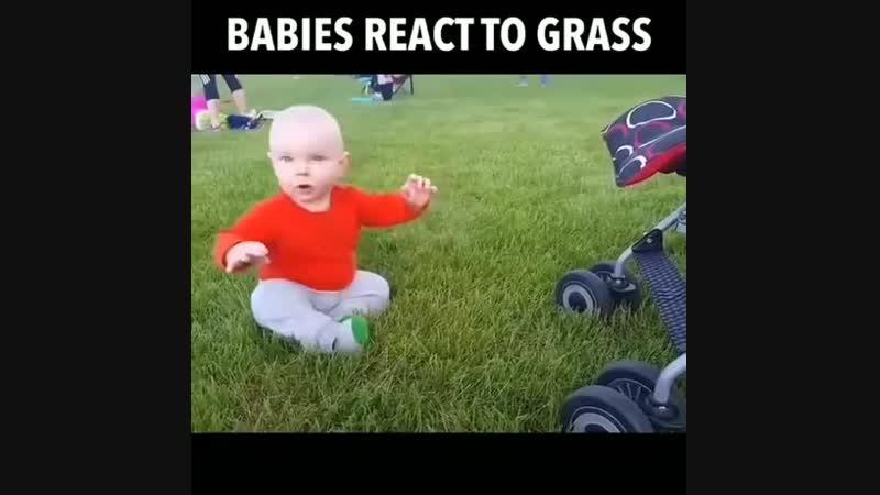 Что ещё за страшная трава