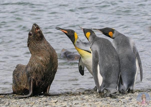 Забавные фото животных в дикой природе