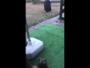 Лилушка играет с Соней в догонялки