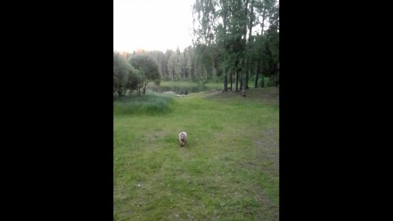Прогулки в парке Встреча с Бубликом