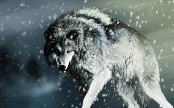 Злой волк картинки карандашом - defc3