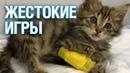 Дети изуродовали котенка и выбросили в Королеве - Подмосковье 2018 г.