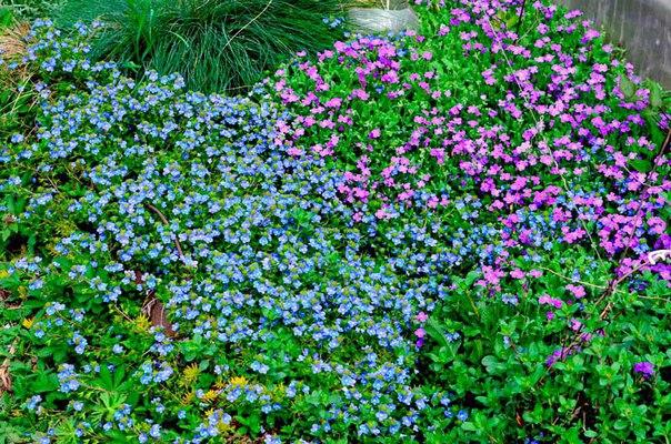 не хотите полоть между клумбами есть пустые места на участкезасадите почвопокровными растениями - и сорняки не растут и вид божественный! вот небольшой список.посмотрите список растений, которые
