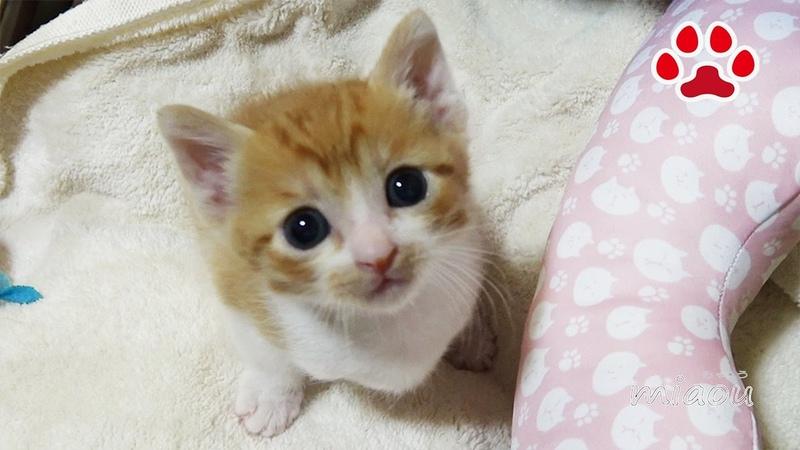 名前を覚えた子猫まや【瀬戸のまや日記】 Maya learned his name.
