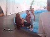 Озабоченный тюлень