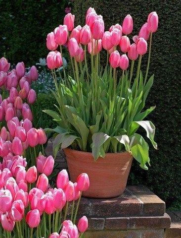 Секрет самого пышного и беспрерывного цветения - многослойная посадка