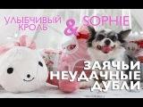 Неудачные дубли с кроликом: смешные чихуахуа Софи и Эйван (смешные чихуахуа):