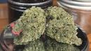Wedding Cake 2 BX2 Marijuana Monday