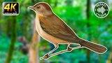 Звуки природы, шум леса и пение птиц для сна и релакса