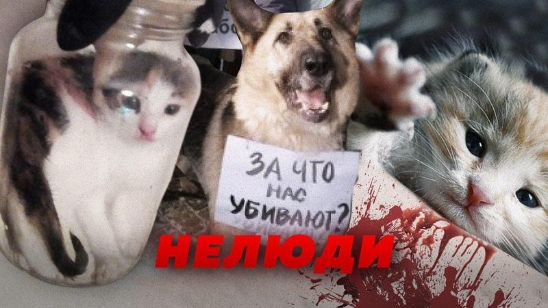 КТО РАССЫЛАЕТ ЖИВОДЕРСКИЕ ВИДЕО Алексей Казаков