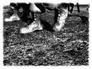Hogs of War UNK