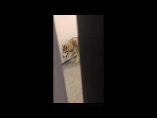 В дом к американской саночнице в Сочи зашел волк