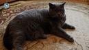 КОШКИ 2019 Смешные коты приколы с котами до слез – Смешные кошки