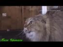 --Хэддавэй животные--от Пахи Черепахи и группы MMA Hero Sport music