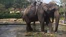 Далат, водопад Пpeнн, Prenn Waterfall, парк, Дзен Буддийский монастырь Thien Vien Truc Lam
