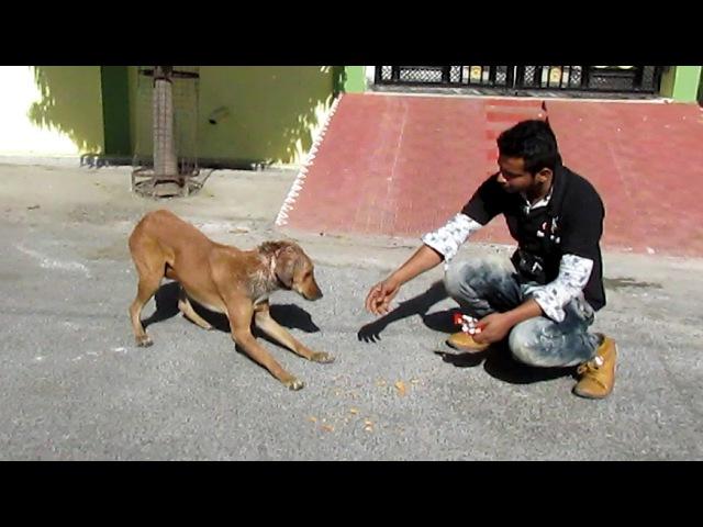 Спасение застенчивой собаки