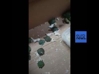 В Маниле задержан груз: 1529 живых черепах, обмотанных скотчем
