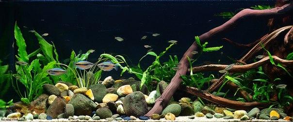 Конкурс дизайна биотопных аквариумов JBL 2014 8mhZ82Ga6d8