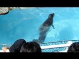 Талантливые японские тюлени под волшебную японскую музыку...