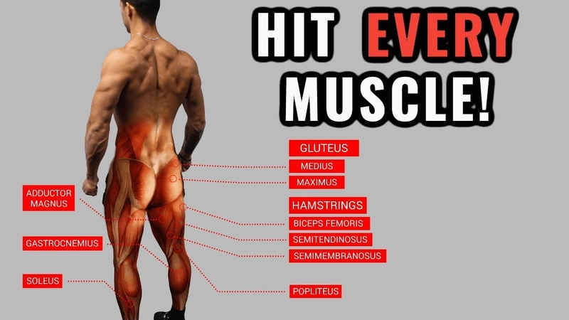 The Best Science Based Lower Body Workout for Growth Quads Hams Glutes