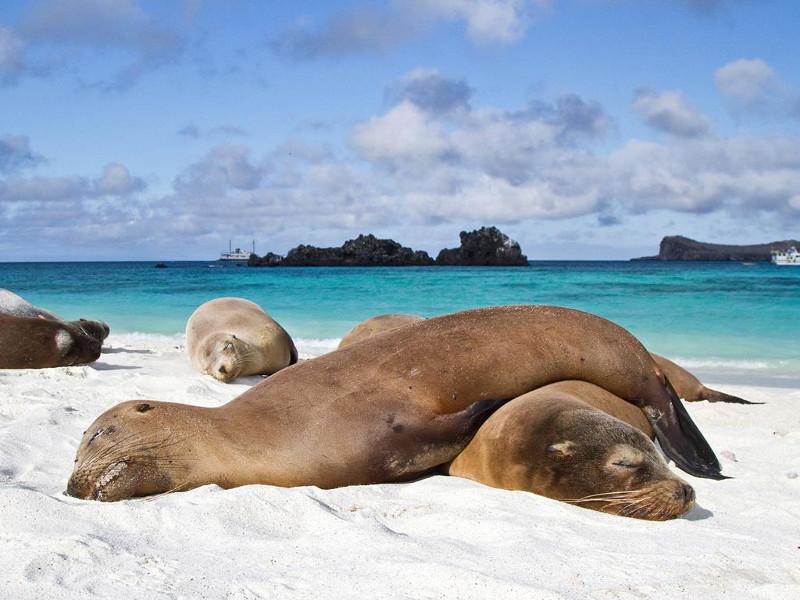 Отдых на Галапагосских островах