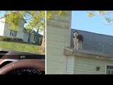 Husky On Roof