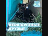 Спасли щенка и котенка