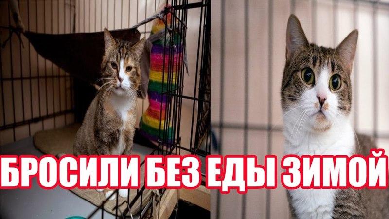 Кошку без еды зимой оставили в деревне   Кошка выживала в деревне   Грустная история кошки Долли