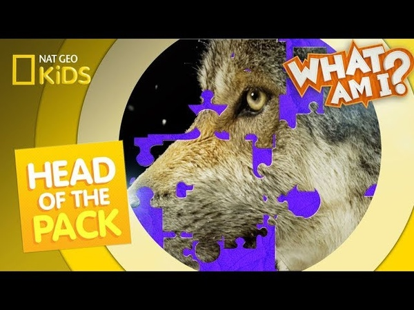 Kids' English | Head of the Pack | What Am I?