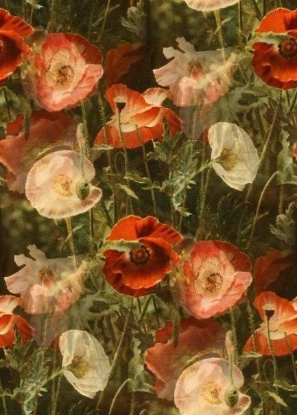 Цветочные и растительные фоны - Страница 2 WfRelFPzNqY