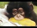Смешые и веселые обезьянки (подборка 2)