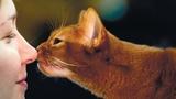 Всем котам нужна любовь! | Животные