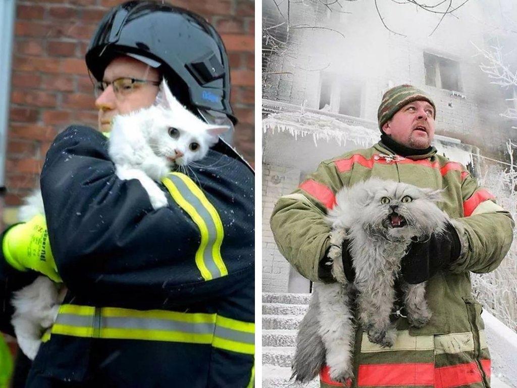 7DZ92wAozm8 - Спасённый кот из Дании vs Спасённый кот из России