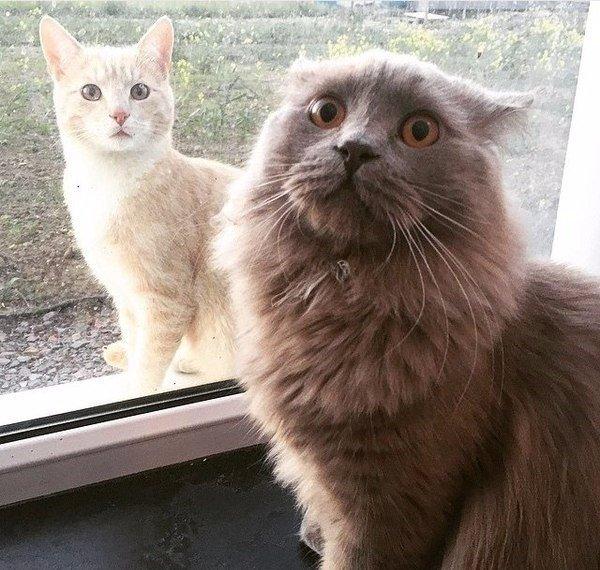 Когда внезапно осознал, что ты не единственный кот во Вселенной