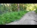 Помойка на лесной дороге под Сертолово