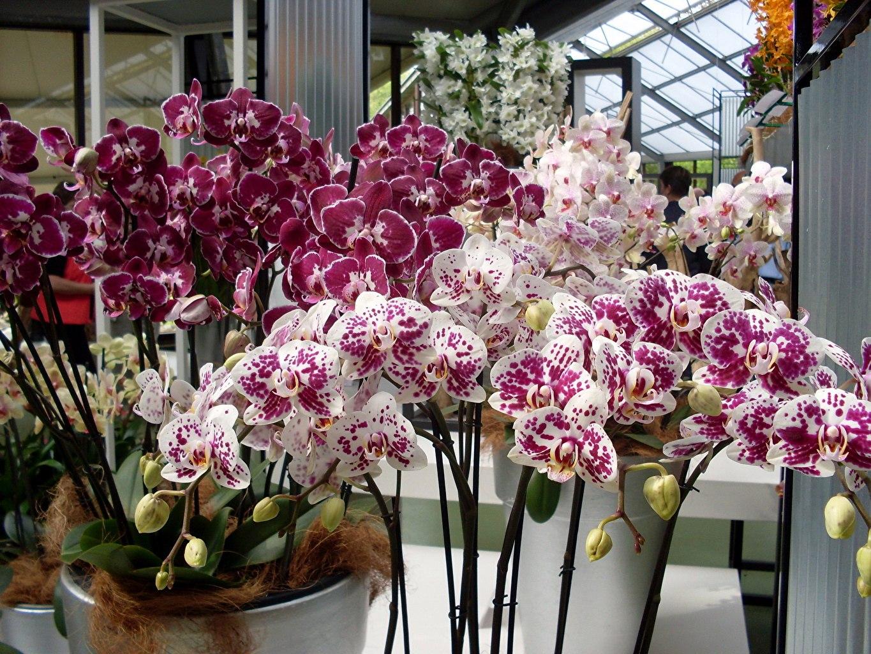 Размножение орхидей, полезные советы, борьба с вредителями