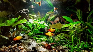 Relax Beautiful Aqvarium - And Ambient Piano Music