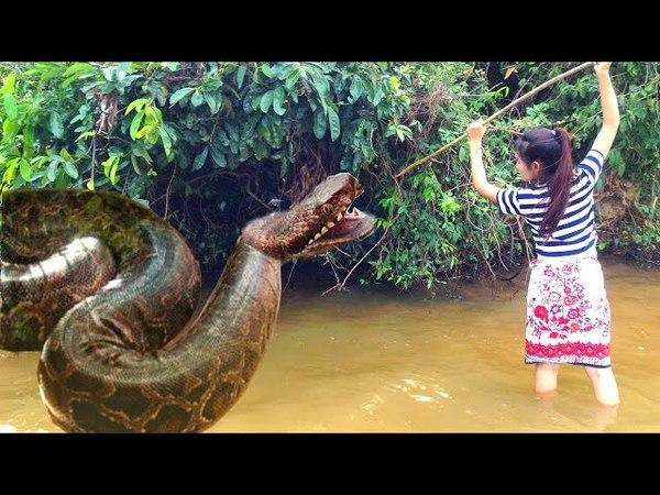 Wow Brave Girl Catch Snake Using Simple Trap Incredible Girl Catch Snake How to catch snake 18